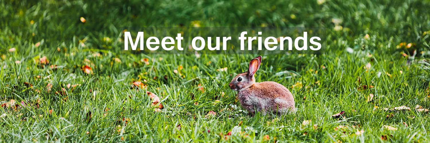 Photo of a rabbit on 'meet the friends and groups who help make Haigh Woodland Park the place it is.